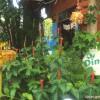 <カフェ>Din Dee (ディンディー)〜土壁の家〜 ※Ramon Cafe