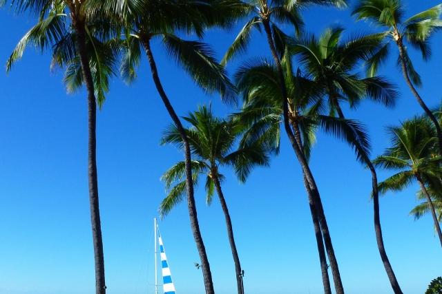 ハワイ ビーチ ヤシ 青空