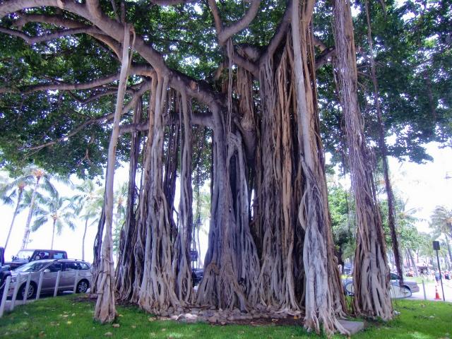 hawaii2016 ワイキキビーチ