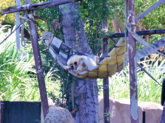 hawaii2016 ホノルル動物園