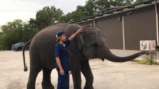 マイカオビーチで象さんに会えたっ!